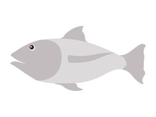 fish gray isolated icon vector illustration design