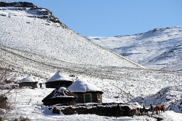 Cattle are seen near snow covered houses at Makopanong village in eastern Lesotho