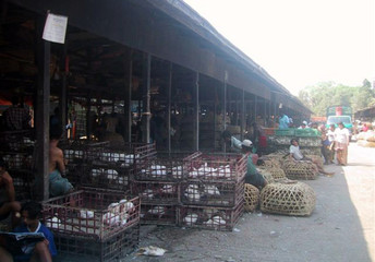 Vendors conduct business at the main chicken wholesale market in Yangon