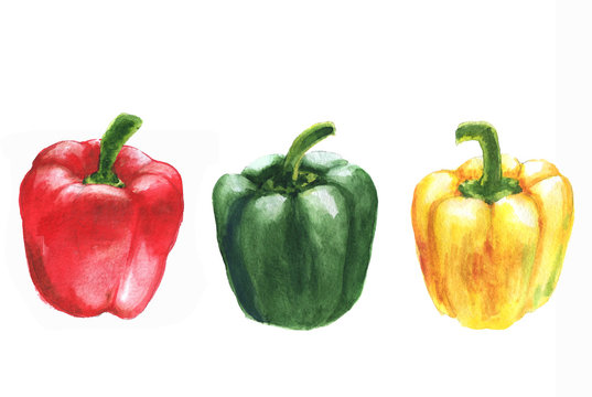 Hand drawn watercolor illustration of fresh sweet peppers - red, green and yellow. Isolated on the white background. Vegetarian food product