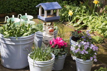 Image of a garden part in spring on a sunny day: flower pots with blossom cyclamen, pansies, tulips in a bud, young plants and a wooden bird feeder with food. Gardening as a hobby.