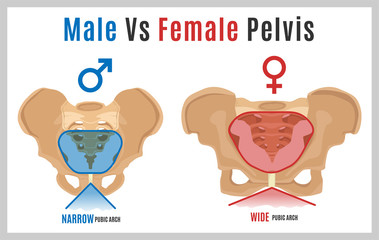Female Male Pelvis-09