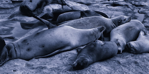 Free sea lions