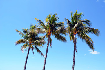 Palm trees, typical tropical landscaping at a Miami Beach condominium