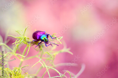 Blurred Photos Of Old Style With Soft Pattern Beetle Of Golden