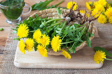 Tuinposter Paardenbloem Whole dandelion plants with roots in a basket