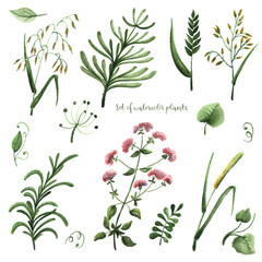 Set of watercolor plants on a white background