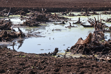 old tree roots in the water in a destroyed bog, peat extraction in Lower Saxony, Germany