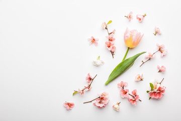 Tulip flower and branches of Japanese quince on white background. Flat lay, top view.