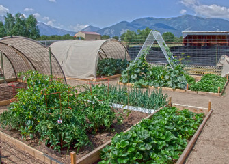 Well Tended Vegetable Garden in the Mountains