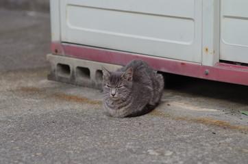 眠たい灰色の猫