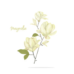 Magnolia digital clip art watercolor flowers yellor flower illustration flowers illustration similar on white background