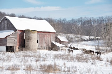 Winter Barn with Horses
