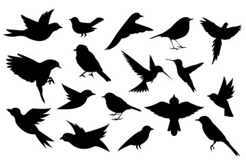 Bird Silhoutte Collection