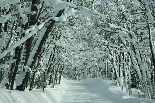 Snow Covered Road with Canopy of Snow Covered Trees in the Upper Peninsula of Michigan
