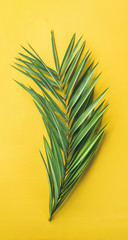 Green palm branch over bright yellow background, top view, narrow composition. Summer vacation or travel concept