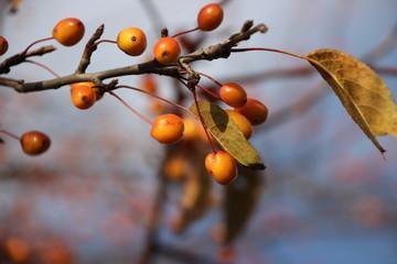 Tree Leaves and Berries