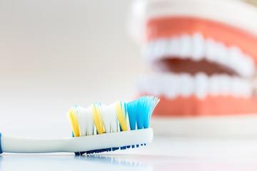 Brush teeth and Demonstration Teeth Model