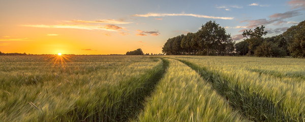 Tuinposter Platteland Tractor Track in Wheat field at sunset