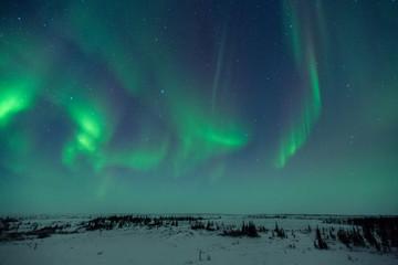 Wall Mural - Aurora Borealis Over Tundra