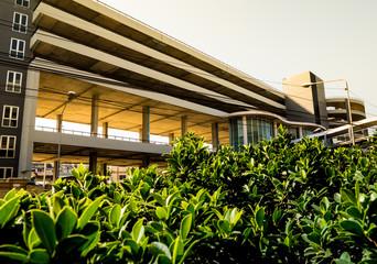 Small bush of banyan tree and the car park building