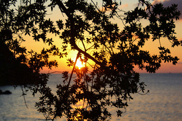 View of a sunset over the ocean behind branches of a tree
