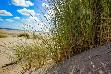 Fototapeta Gras am Meer