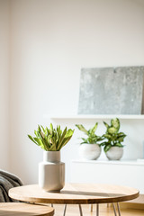 Fresh white tulips in ceramic vase standing on wooden table in the photo of bright room interior with potted plants and modern painting in blurred background