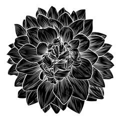 Chrysanthemum or Dahlia Flower Retro Woodcut