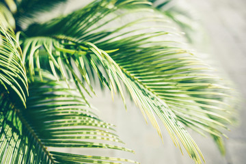 Palm leaves in sunlight. Nature tropical background.