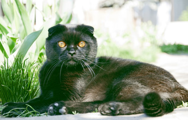 black cat in the garden