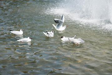 水浴びをする鳥