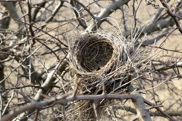 Birds nestle on tree