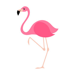 Pink flamingo vector illustration.