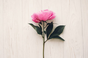 lovely pink peony  on rustic white wooden background top view, space for text. floral greeting card. beautiful peony flower flat lay, tender image. mock-up