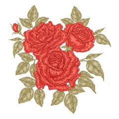 Hand drawn red roses flowers and leaves. Vintage floral composition. Spring garden flowers isolated. Vector illustration.