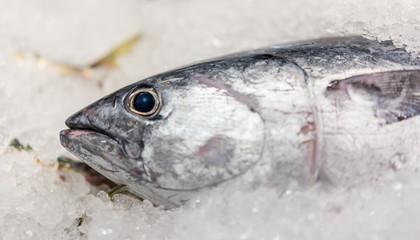 Fresh seafish in fish market