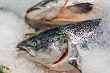 Fresh salmon fish in seafood market