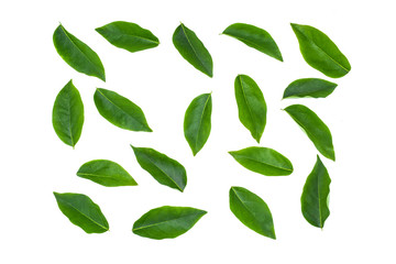 Fototapete - flat lay collection of green leaf isolated on white background