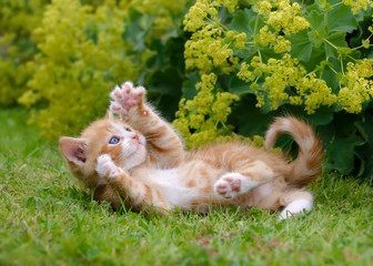 Cute kitten playing in a flowery garden