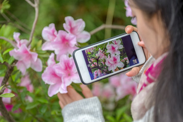 woman use a smart phone to capture flowers