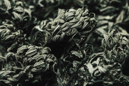 Full frame shot of marijuana leaves