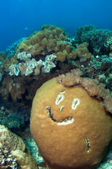 Happy coral reef.