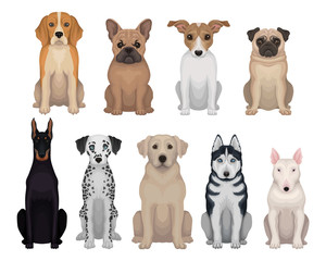 Detailed flat vector set of dogs of different breeds. Domestic animals. Design for poster of animal clinic, kennel club, zoo store