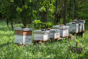 group of blue wooden beehives in a green meadow at spring