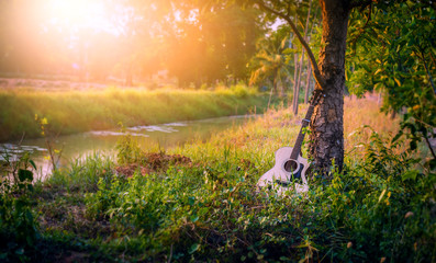 The guitar is placed under the tree at sunset