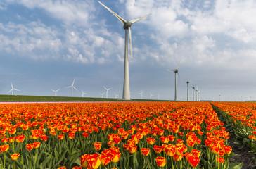Orange tulip field and wind turbines in the Noordoostpolder municipality, Flevoland