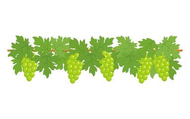 Green grapes border
