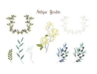 Olive digital clip art magnolia flor watercolor drawing flowers illustration similar on white background