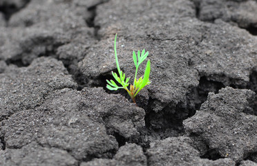 Concept of a life and purpose. Lonely green sprout breaks through the dry earth. Ecology and environment background. Wall mural